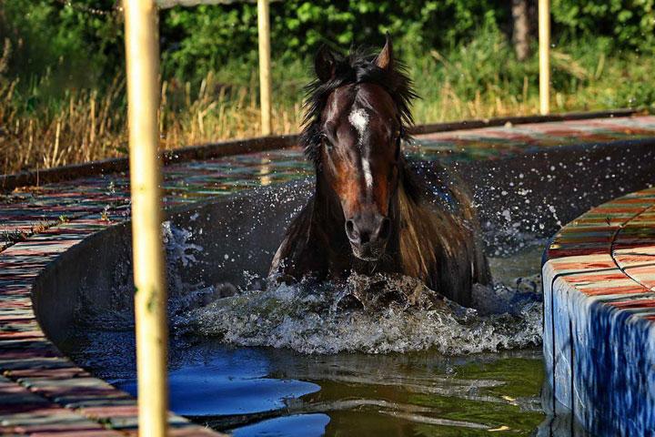 عکس های جدید از سیلمی های مرکز تولید و پرورش اسب رادان